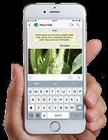 Phytus Club - Whatsapp