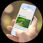 Phytus Club - Transmissão Whatsapp